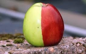 chimera fruit.png