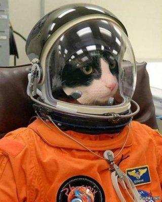 astrocat.jpg