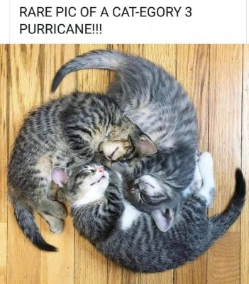 cat hurricane.jpg