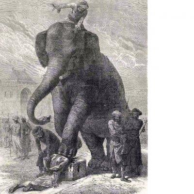 elephant-execution-2.jpg