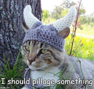 Viking feline.JPG