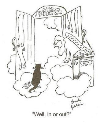 cat-in-heaven.jpg