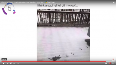 squirrel fell off my roof.png