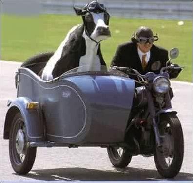 889-side_car_cow.jpg