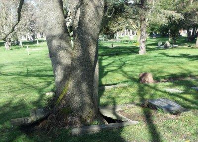tree graVE.jpg