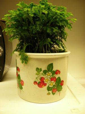 Plant0486.jpg