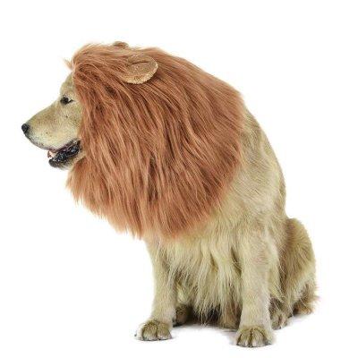 liondog.jpg