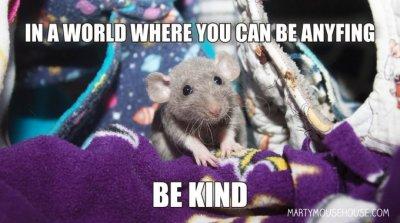 kind rat.jpg