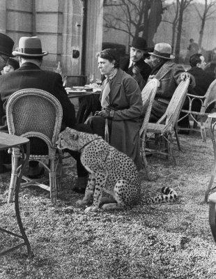 Cheetah Bois de Boulogne 1963.jpg
