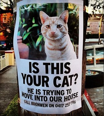 Is this your cat.jpg