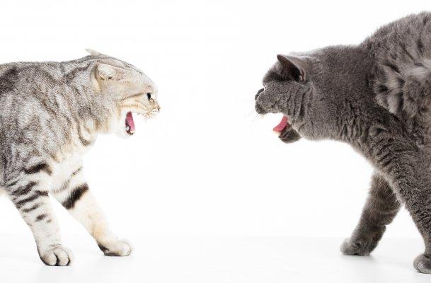 CAT FIGHT.jpg
