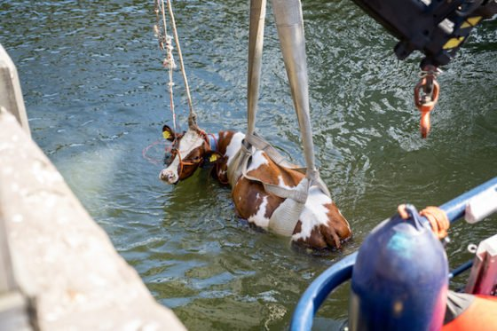 Floating farm 2.jpg