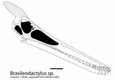 Brasileodactylus_skull_I_9b89.jpg