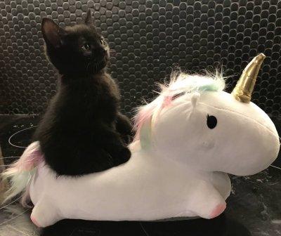 Kitten and unicorn.jpg