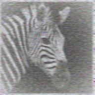 Schrodinger's Zebra