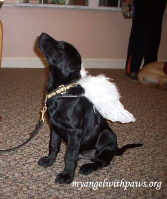dog angel wings.jpg