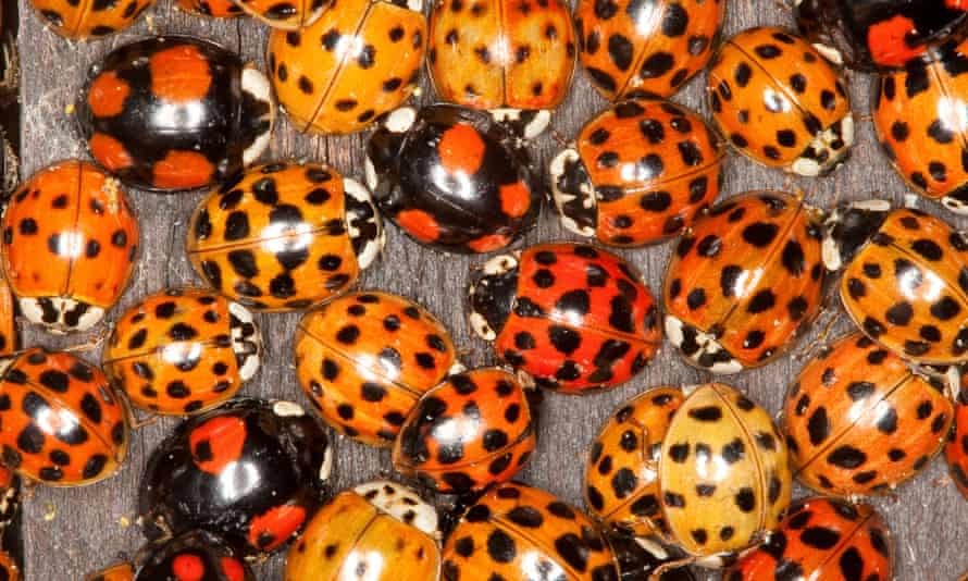 Ladybirds.jpeg